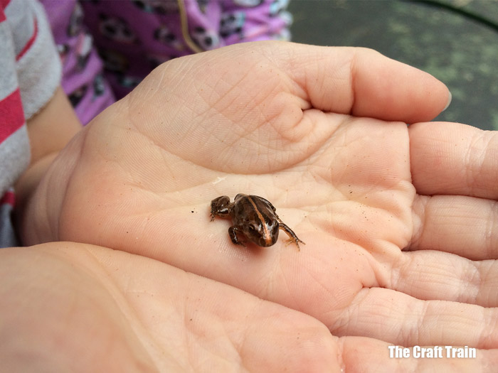 froglet in hands