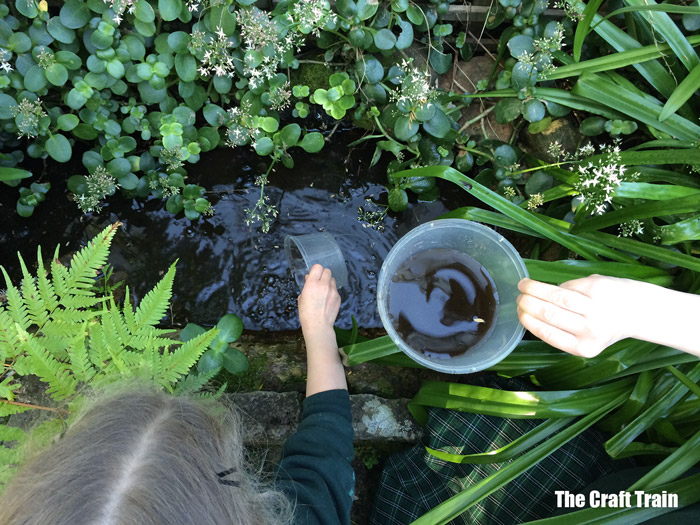 kids catching tadpoles