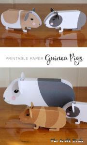 guinea-pigs-pin